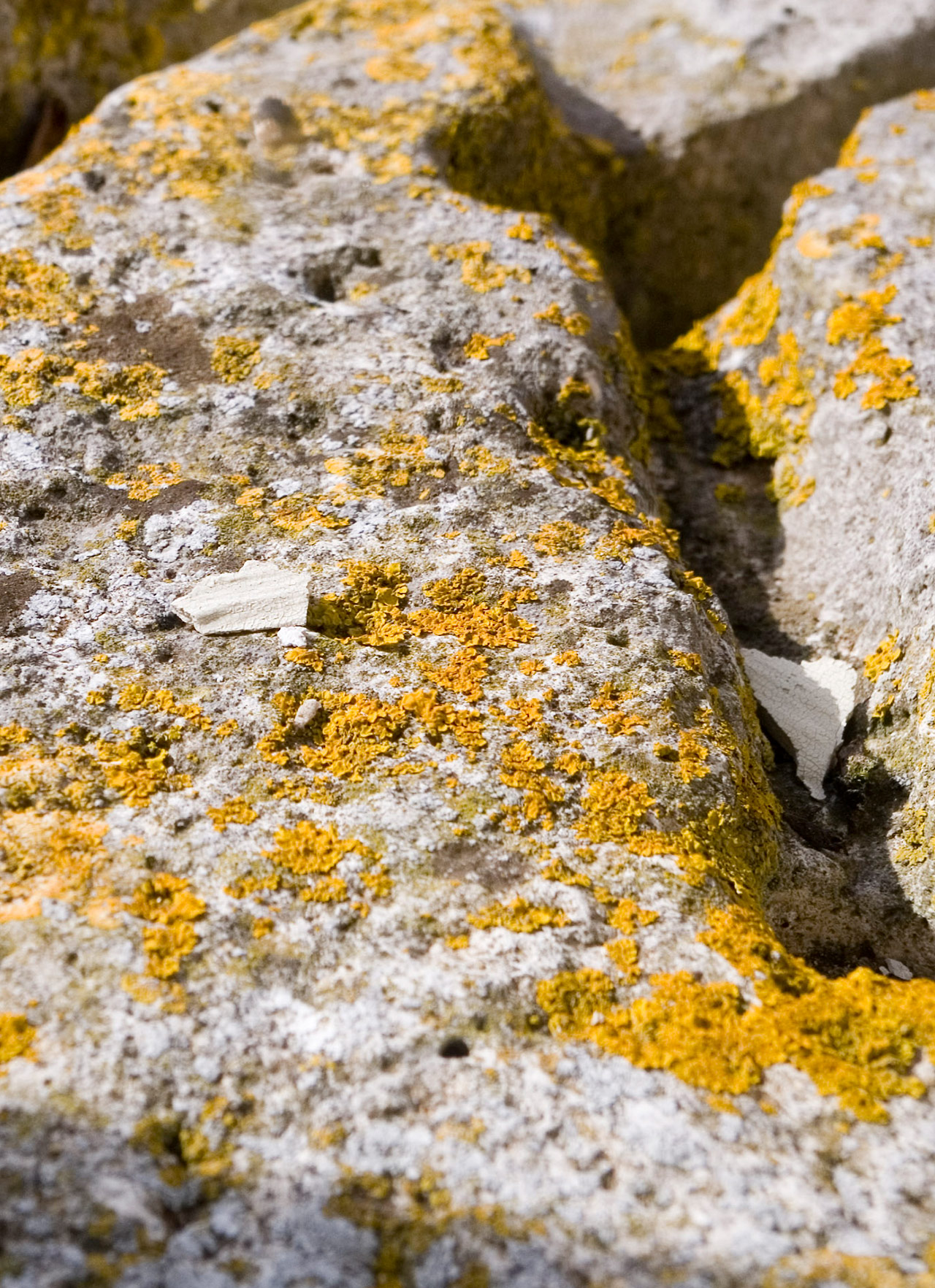 Close up view of jagged rock surface with yellow moss