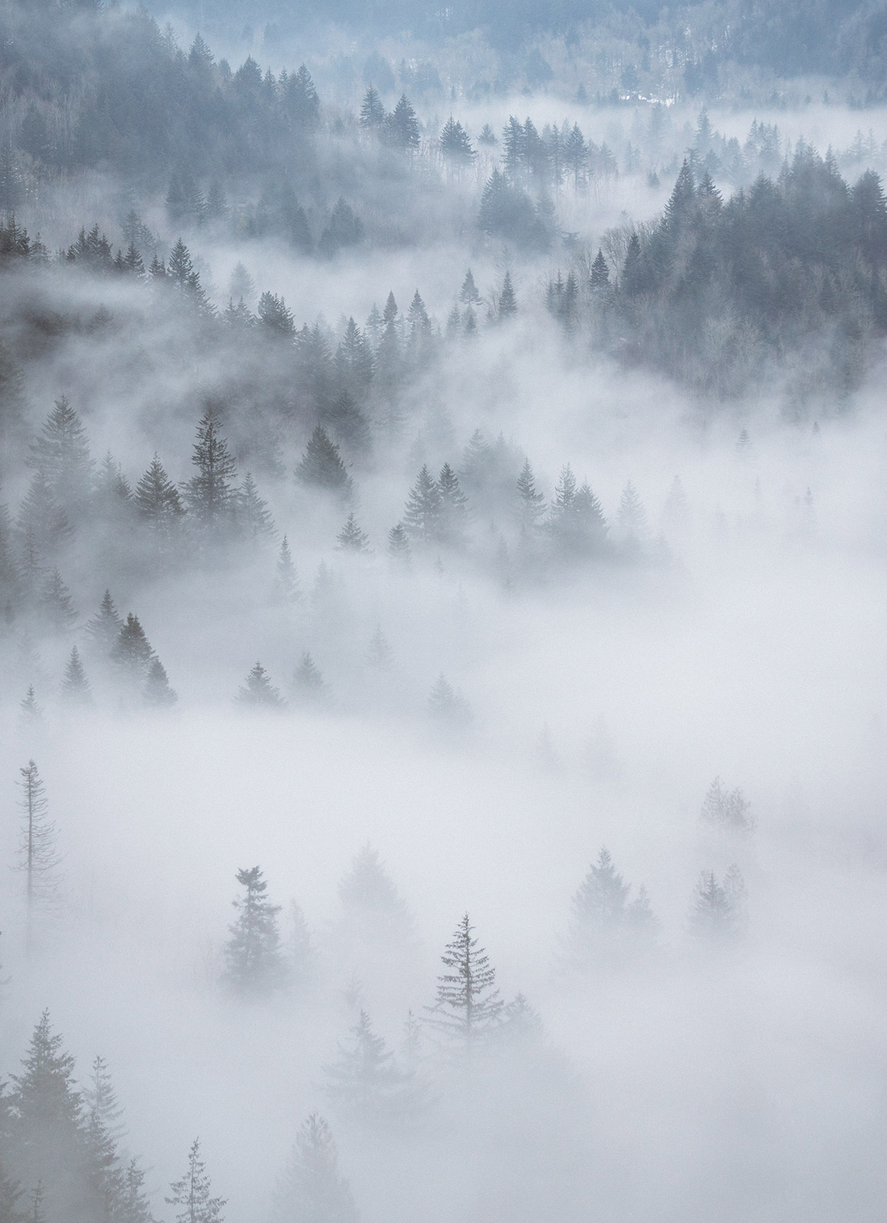 Fog covered tree tops.